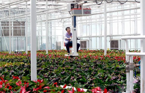 花木社区—亚洲最大花卉基地一期投产—花木商情网