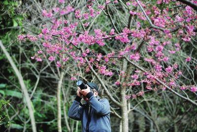 花木社区—福州:森林公园樱花