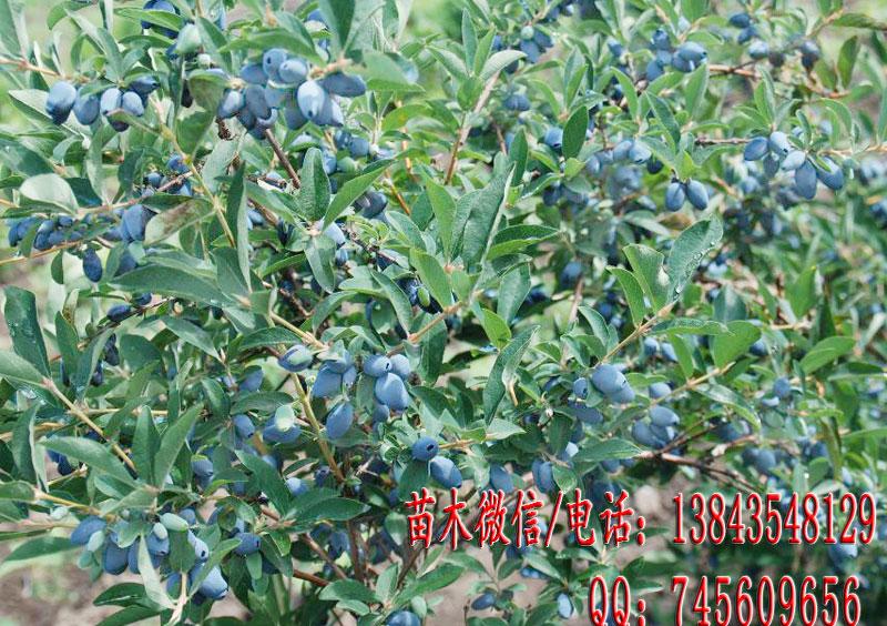 四川喜欢潮湿的果树