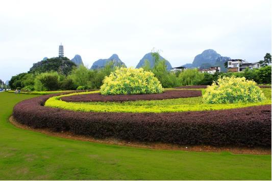 彩叶植物组合应用场景