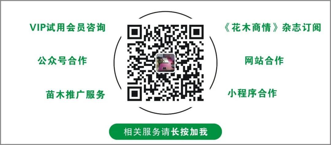 网站SEO及公众号推广专家