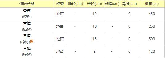 广东香樟树价格