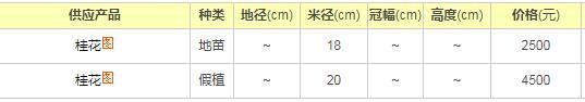 广西桂花树价格
